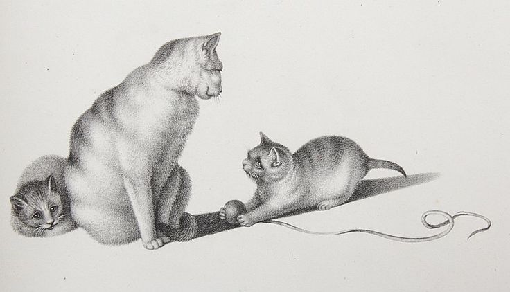 http://www.catgallery.ru/art/gottfried-mind/cats/gottfried-mind-cats-3.jpg