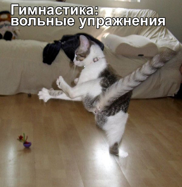http://www.catgallery.ru/gal/fun/friday-fun/cat-gymnastics-floor.jpg