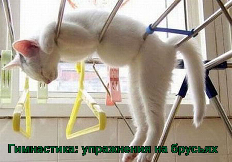 http://www.catgallery.ru/gal/fun/friday-fun/cats-gymnastics-bars.jpg