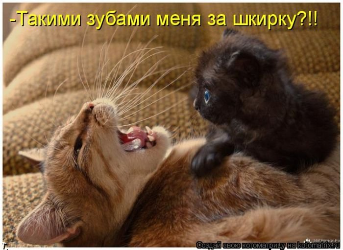http://www.catgallery.ru/gal/fun/friday-fun/friday-fun-cats-8.jpg