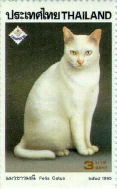 Као Мани: описание породы кошек