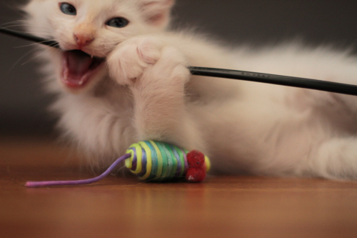 Что делать, чтобы кот не грыз провода