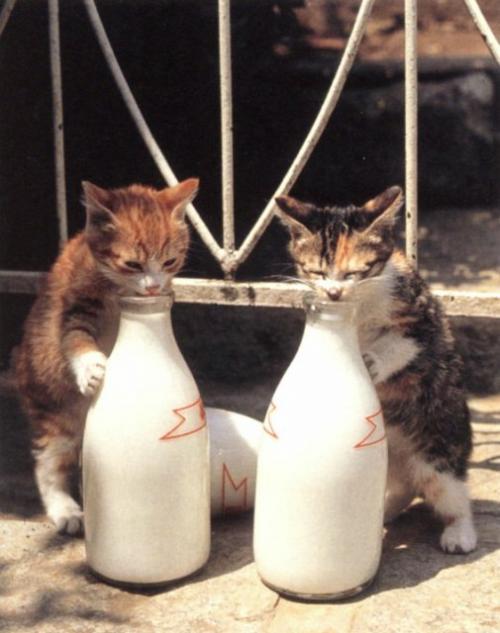 Оливковое масло в рационе собак и кошек