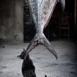 Кот-клептоман