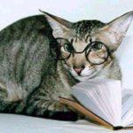 Мисс Китти — кошка-преподаватель