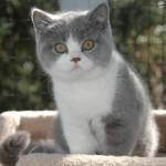 Владимир Высоцкий, «Песня Чеширского кота»