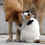 Карел Чапек, «Собака и кошка»