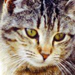 Кир Булычев, «Разум для кота»