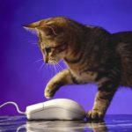 Кот — интернетчик