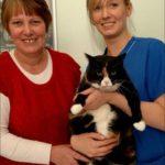 Толстый кот из Манчестера выиграл программу для похудения