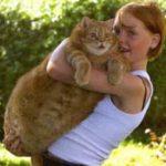 Самый толстый кот в Дании