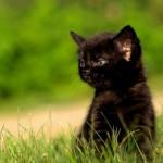 «Black Cat», Gentle Giant