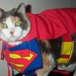 Анекдоты о кошках — 11