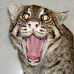 Анекдоты о кошках — 3