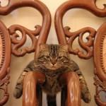 Анекдоты о кошках — 4