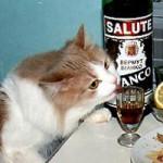 Кошачья вечеринка (+ фото)