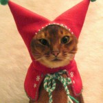 Анекдоты о кошках — 12