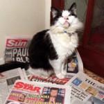 Хамфри — кот с Даунинг-стрит