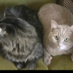 Инженерное руководство по эксплуатации кошки (на английском)