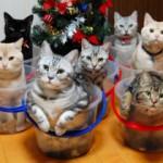 День кошки в Америке