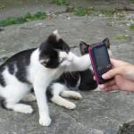 Япония: Тасиро, остров кошек