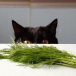 День черного кота в Италии