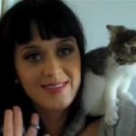 Кэти Перри и кошки