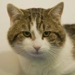 Ларри, кот, которого попросили с Даунинг-стрит