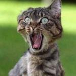 Смешные цитаты о кошках с башорга