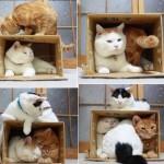 Кот (кошка) Шредингера