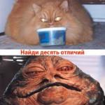 Цитаты о кошках с bash.org.ru