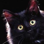 Матаготы — французские денежные коты