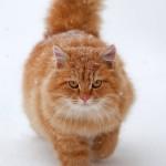 и еще 10 фактов о кошках!