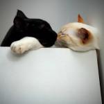 Маяковский,  «Черные кошки»