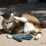 Дасти, кот-клептоман с Animal Planet