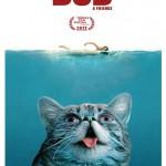 Lil Bub — главный конкурент Сердитого кота
