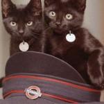 Кошки лондонской подземки