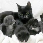 Кошка Джоли, которая привела спасителей к своим котятам