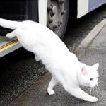 Разъезжающий на автобусе кот Макавити из Уолсолла