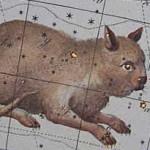 Как кошка пропала со звездного неба