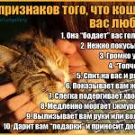 10 признаков того, что кошка вас любит