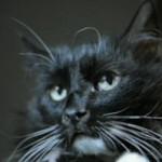 Кот (Стругацкие, «Понедельник начинается в субботу»)