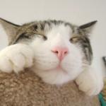 Фернандо Пессоа, «Котенок, ты спишь, как дома»