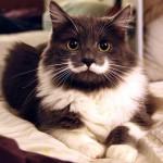 Самые усатые коты интернета