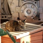 Кошки Диснейленда