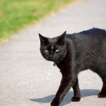 Демонический кот из Вашингтона