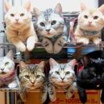 10 способов грамотно хранить ваших кошек