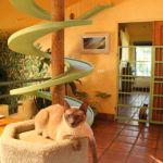 25 способов превратить квартиру в кошачий дворец - идеи улучшения дома или квартиры для своих питомцев