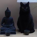 15 котов, познавших дзен