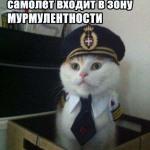 8 котов-пилотов